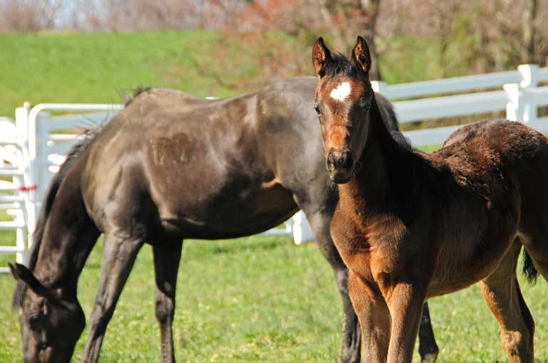 Foal standing with mare