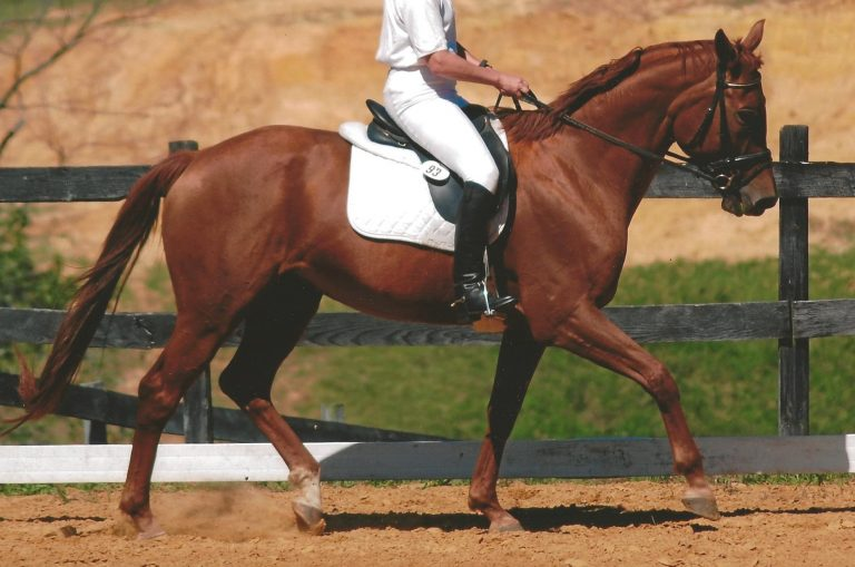 Peaches dressage