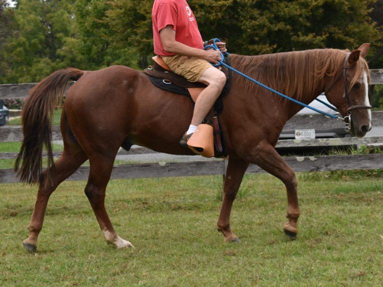 Houston walk under saddle
