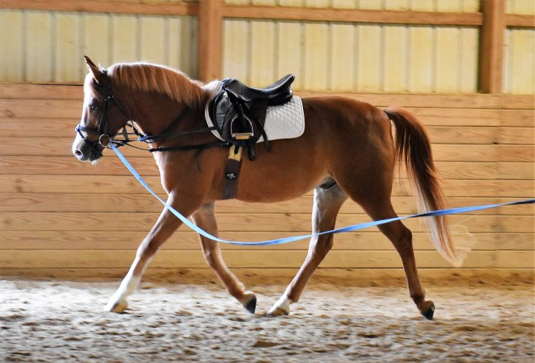 Red lunge trot