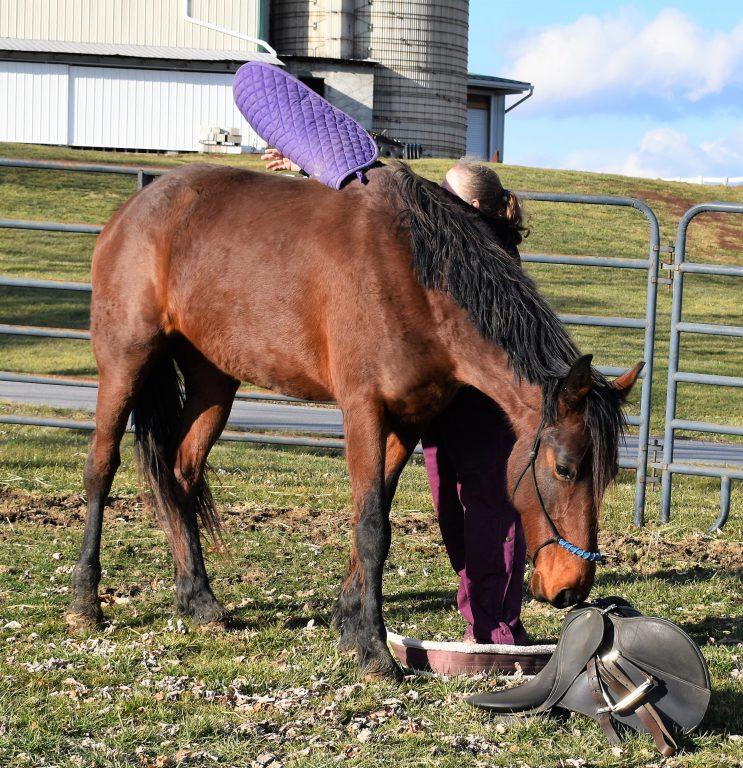 Sky saddle