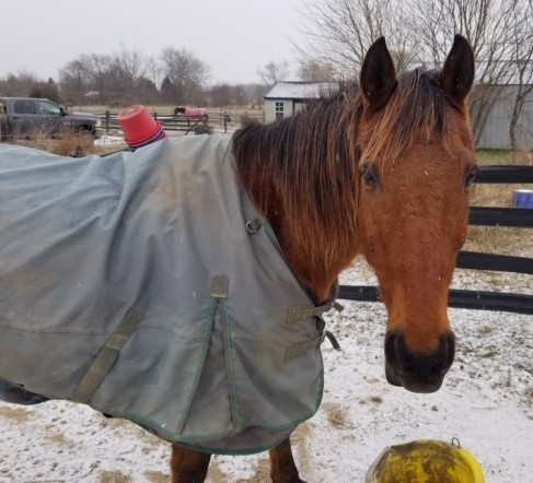 Yeates blanket